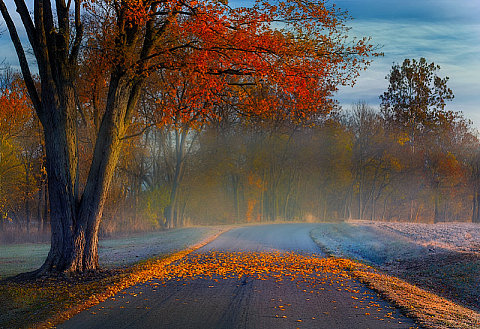 Autumn Morning, by Allen Conrad