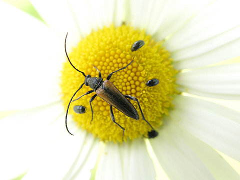 The Insect