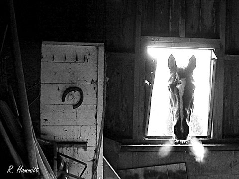 Looking in the Barn