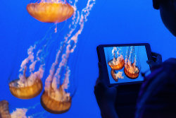 1Jelly Fish PhotoA.jpg