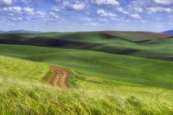 Road in the Palouse