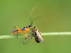 Assassin Bug Juice.jpg
