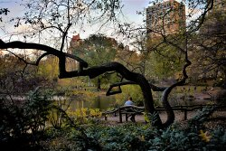 Central Park Bench and Matching Railing