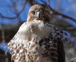 Excellent Hawk Day
