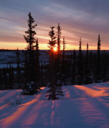 Winter Taiga Sunrise