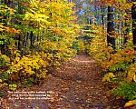 Woodland-path-Hiram-Maine-t.jpg