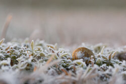 Shell in Frost